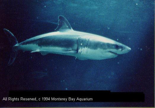 Captive Sharks